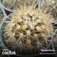 Neoporteria villosa JN 788