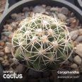 Coryphantha 240.140